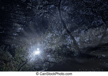 Forest in a full moon night as seen from below