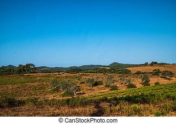 Forest in a landscape - A forest in a landscape with dry...