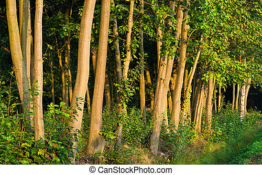 Forest in a morning's warm sunlight