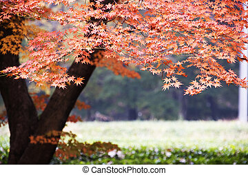 Forest in autumn foliage