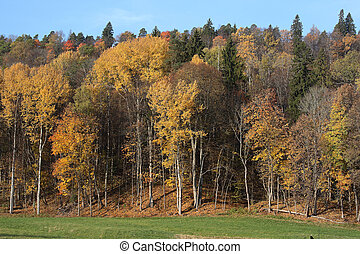 Forest in autumn. Gauja National Park