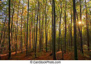 Forest in autumn light
