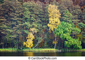 Forest in autumn over the lake