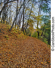Forest in autumn, people - pair walking