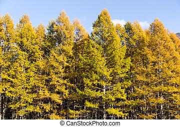 Forest in autumn season