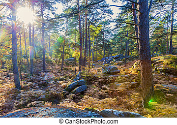 Forest in Autumn with Lens Flares