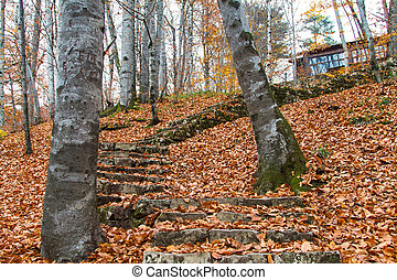 Forest in Autumn with Mountain House