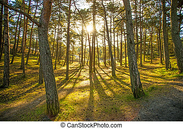 forest in back light