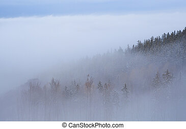 forest in dense fog