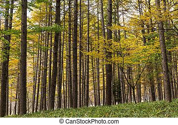 Forest in Fall season