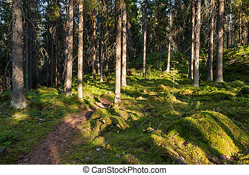 Forest in Finland at summer