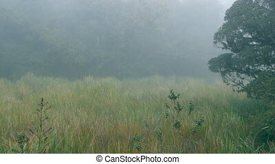 Forest in foggy rainy weather. Dense fog in woods.