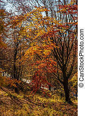 forest in golden brown foliage on sunny day with beautiful...