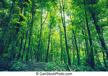 Forest in green colors in the springtime