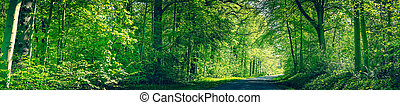 Forest in green colors with a road