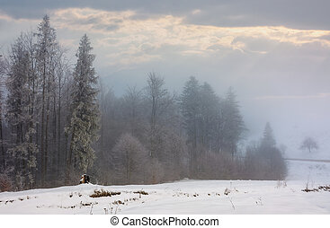 forest in hoarfrost at foggy sunrise