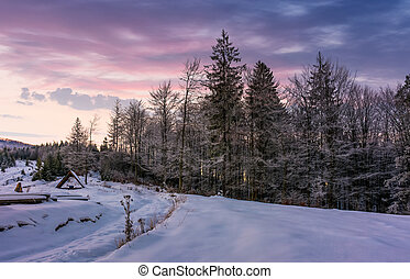 forest in hoarfrost on snowy hillside at dawn. gorgeous...