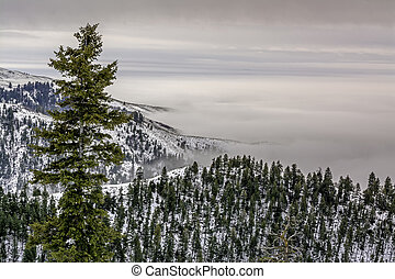 Forest in Idaho with a valley inversion fog