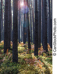 Forest in late summer with backlight and lens flare