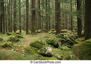 Forest in Manali, India