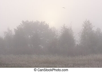 Forest in morning mist and a flying bird above forest