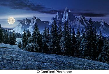 forest in mountains with rocky peaks at night - spruce...