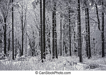 Forest in snowstorm