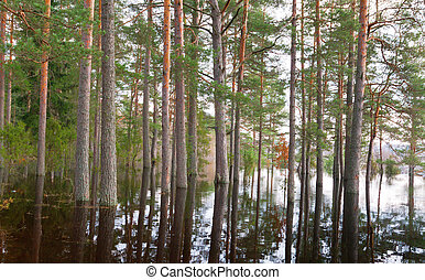 Forest in spring water