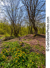 forest in springtime on a sunny day. lovely scenery with...