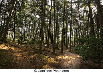 Forest in summer -horizontal