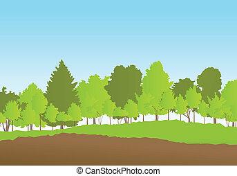 Forest in summer vector background landscape