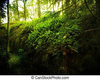 Forest in Sunlight  - Forest in sunlight