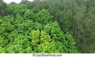 Forest in sunny day. Aerial view on thicket of the forest