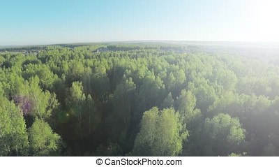 Forest in sunny day aerial. Wood and blue sky view fron the...