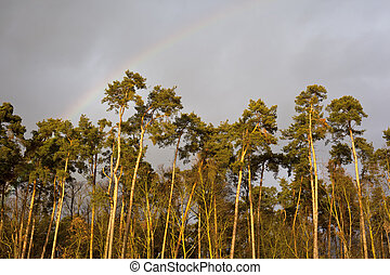 Forest in sunset with rainbow