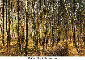 Forest in the autumn (fall)
