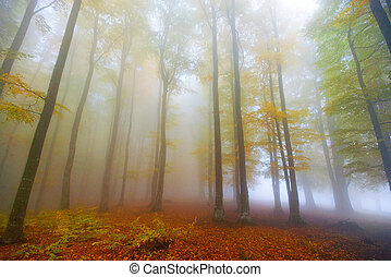 forest in the autumn