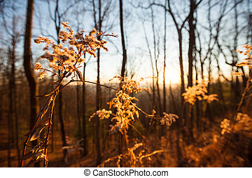 Forest in the Blue Ridge mountains