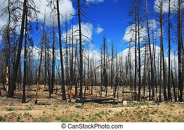 Forest in the first summer after the fire