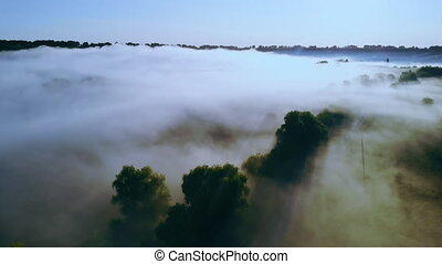forest in the fog aerial view