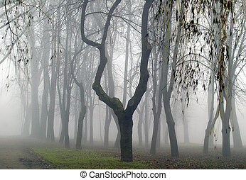 Forest in the fog,