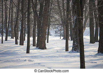 Forest in the snow.