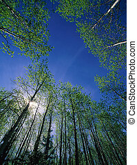 Forest in the sunshi - The view in Tibet