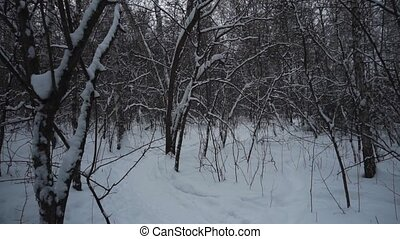 Forest in winter. A lot of snow.