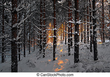 Forest in winter at sunset