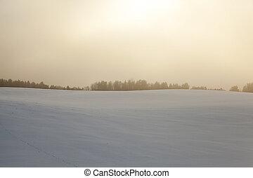 forest in winter, dawn