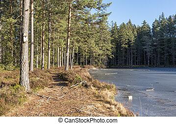 Forest in winter in Sweden