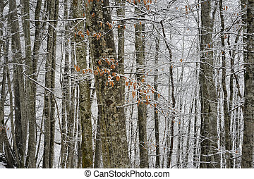 Forest in winter - Snow covered forest in winter with autumn...