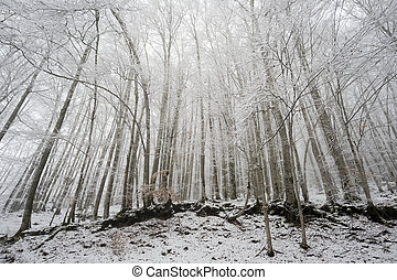 Forest in winter - Snow covered forest in winter with wide...
