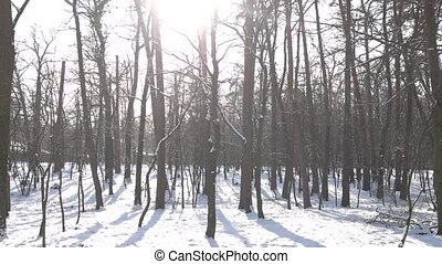 Forest in winter. Snowy weather, bright sun.